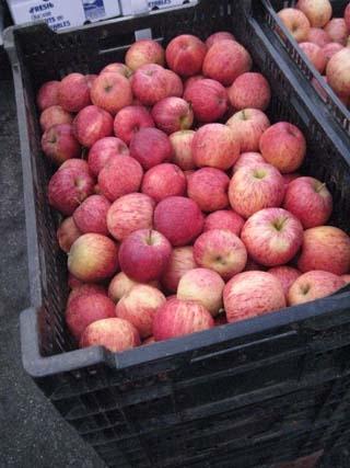 apples-03