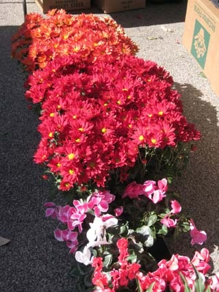 flowers-09