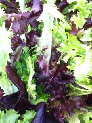 lettuce-01