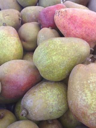 pears-01