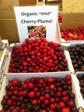 plums-01