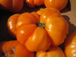 tomatoes-04